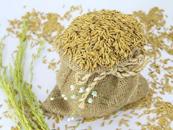 Giá cả thị trường nông sản ngày 26/04: Giá gạo, giá phân bón ổn định