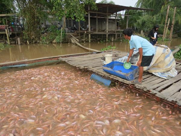 Giá cả thị trường nông sản hôm nay 03/05: Giá cá Diêu Hồng giảm, giá dưa tăng...