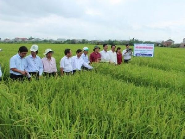 Đề xuất nhiều chính sách khuyến nông