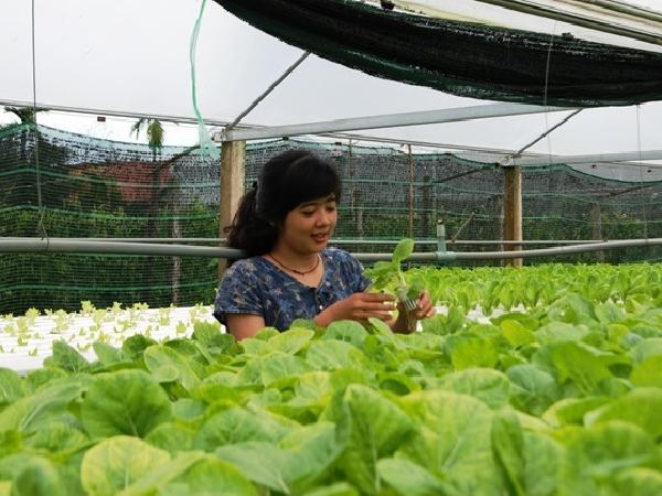 Về quê khởi nghiệp nghề nông sẽ được hỗ trợ vay vốn