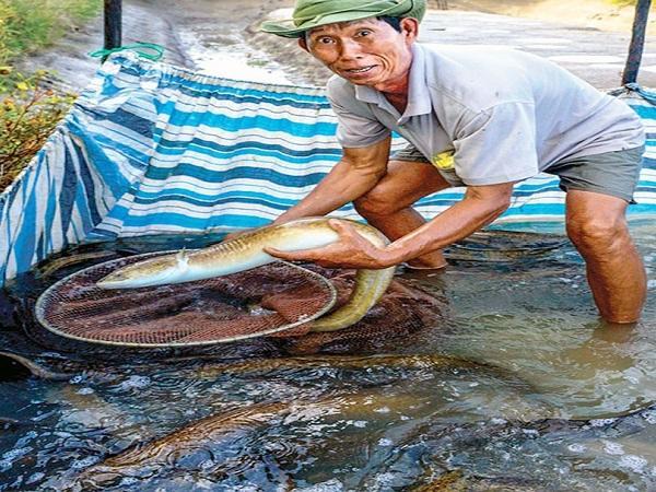 Làng cá chình Tân Thành trước sức ép ... nhường đất