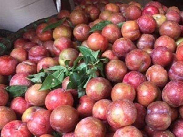 Mận Hà Nội được bán với giá 35 ngàn đồng/kg tại chợ Hiệp Thành