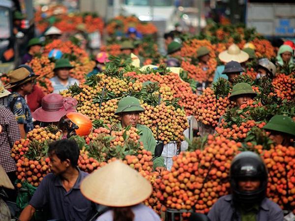 Tin vải thiều Bắc Giang 3.000 đồng/kg, người dân phải mang đi đổ sông là bịa đặt