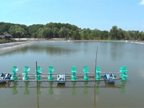 NT-Hướng dẫn tăng cường quản lý nuôi tôm, nghêu