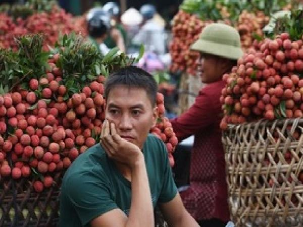 """Nông sản Việt """"ế"""" do đâu?"""
