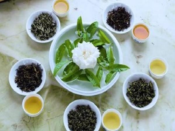 TH-5 giai đoạn biến búp chè thành trà xanh