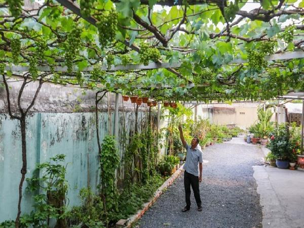 khí hậu, thổ nhưỡng ở Cần Thơ thích hợp trồng loại cây gì