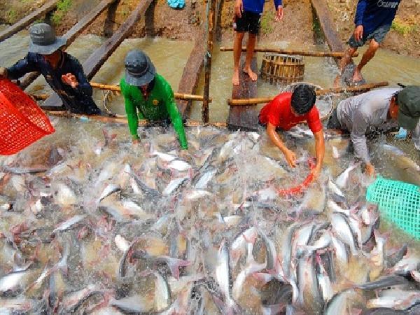 Sửa quy định cấp bù lãi suất tín dụng phát triển thủy sản