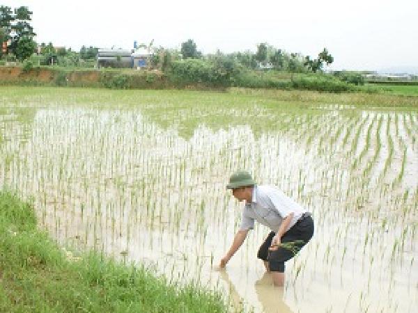 CS-Hướng dẫn khắc phục hậu quả mưa bão đối với sản xuất trồng trọt vụ Hè Thu, Mùa 2018 các tỉnh phía Bắc