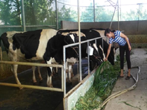 CB-Một số phương pháp chuẩn đoán bệnh viêm vú trên bò sữa