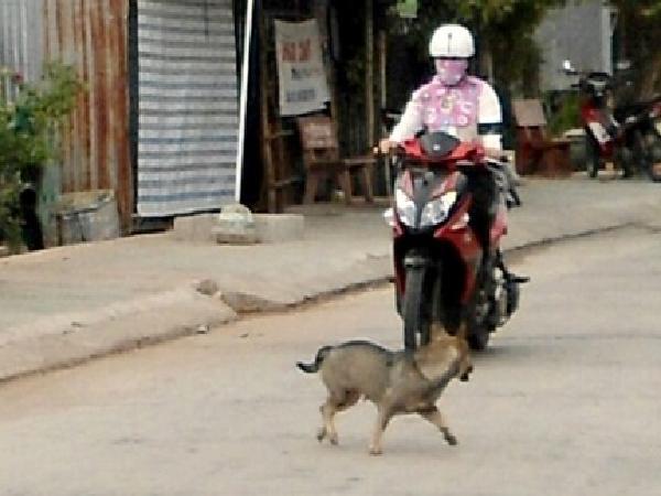 Thả rông chó bị xử phạt như thế nào?