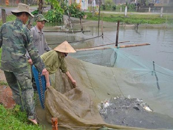 NT-Kỹ thuật phòng bệnh cho cá nước ngọt trong giai đoạn chuyển mùa