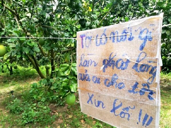 Chủ vườn bưởi ở Bà Rịa - Vũng Tàu treo biển 'van xin' kẻ trộm