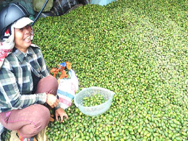 Cau tươi mang tiền tỉ cho người trồng vì bán sang Trung Quốc làm kẹo