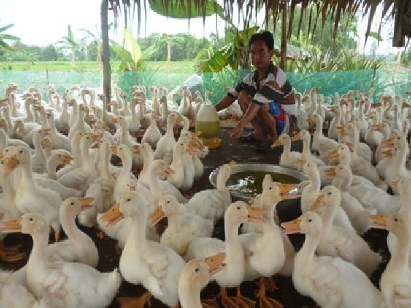Cảnh báo dịch bệnh trên vật nuôi thời điểm giao mùa