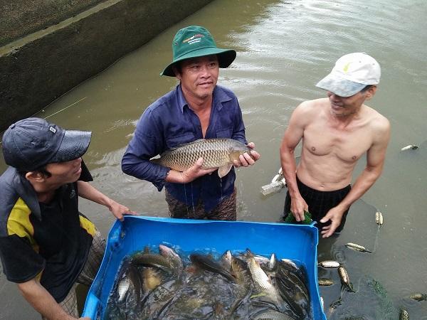 NT-Kỹ thuật nuôi cá chép giòn tại Khánh Hòa