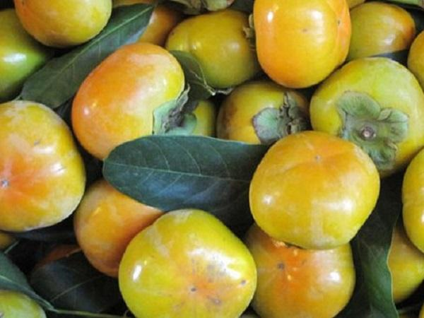 Lâm Đồng: Đặc sản hồng giòn Đà Lạt được mùa, trúng giá