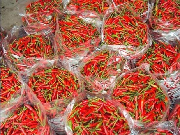 Malaysia cảnh báo ớt Việt Nam