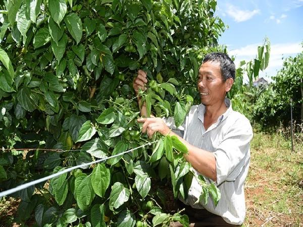 Quy trình để nông dân được chứng nhận VietGAP