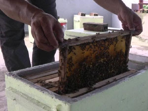 N-Hướng dẫn cách làm thùng nuôi ong mật (giống nội địa) bằng xi măng