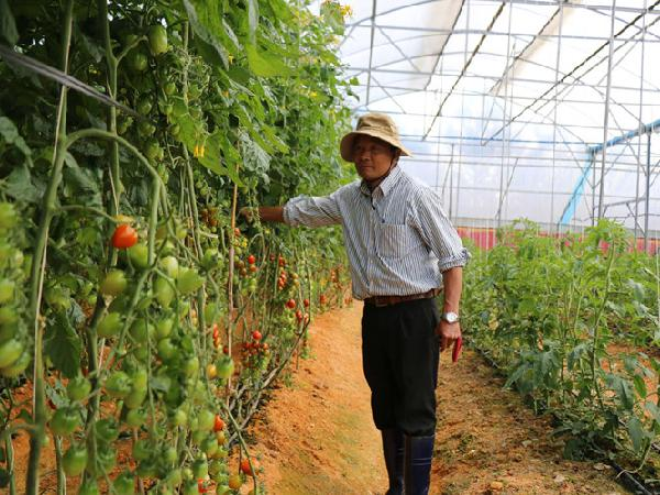 Trang trại rau công nghệ cao trăm tỉ