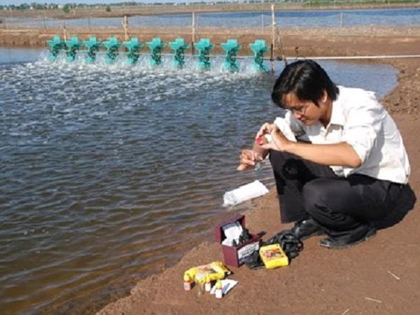 NT-Quản lý khí H2S trong ao tôm