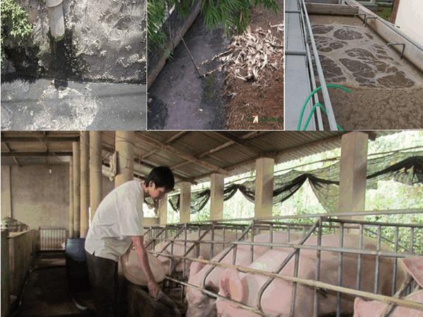 XL-Xử lý chất thải và khống chế mùi hôi trong chăn nuôi