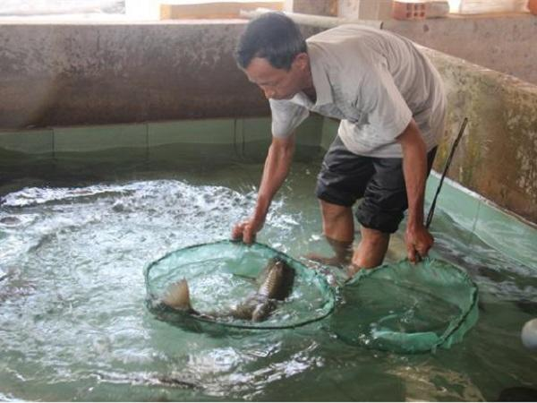 Bí quyết nuôi cá chình, cá bống tượng thành công sau nhiều lần thất bại