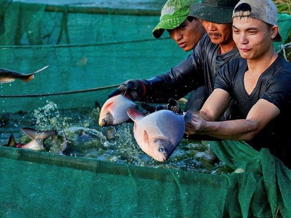NT-Bảo vệ thủy sản nuôi trong mùa mưa bão