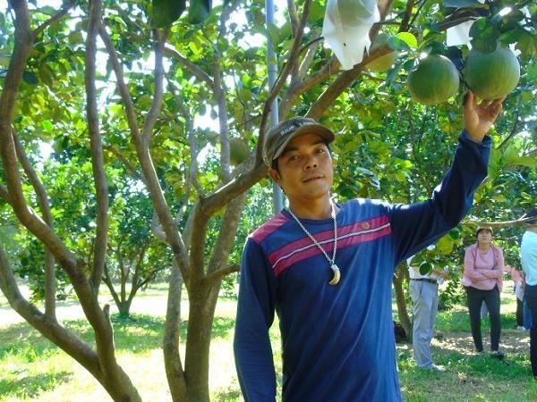 Người nông dân trẻ với kinh nghiệm trồng bưởi da xanh