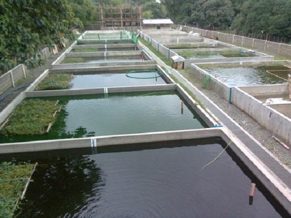 Nuôi trồng thủy sản công nghệ cao: Đột phá về năng suất, chất lượng