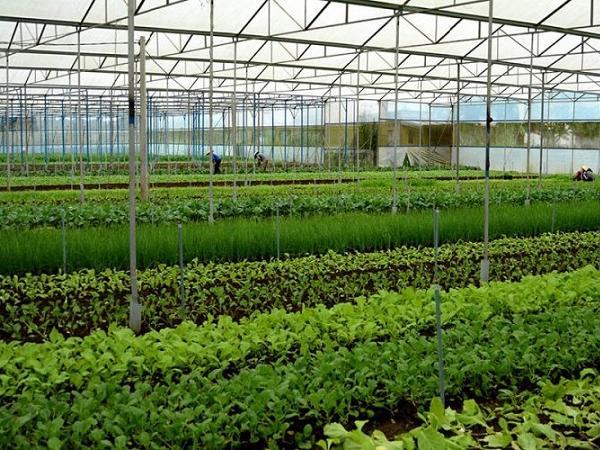 Nông nghiệp ứng dụng công nghệ cao thích ứng với biến đổi khí hậu