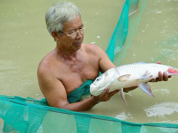 Bí quyết làm giàu: Nhân giống cá bống tượng kết hợp nuôi cá hô