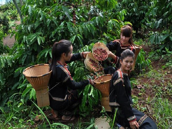 Thương nhân Ai Cập mở rộng nhập khẩu cà phê Việt