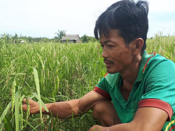 Mua lúa non về làm thuốc nam, nông dân vẫn bán dù chưa rõ thực hư ?