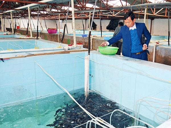 NT-Chăm sóc cá giống trong mùa đông