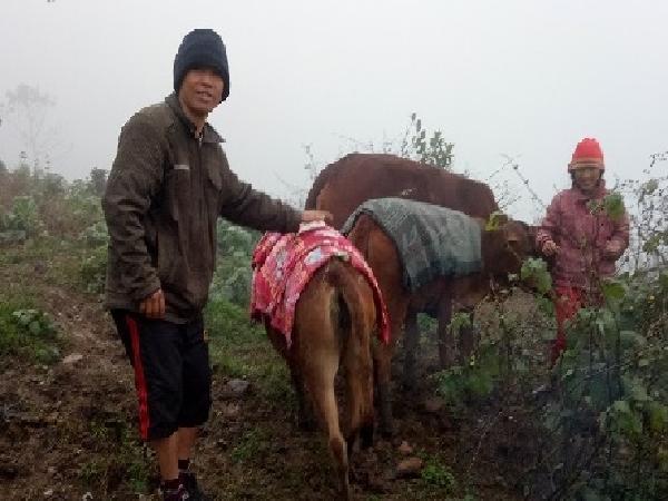 Tây Bắc tụt xuống 4 độ C, nhà nông đắp chăn, sưởi ấm cho trâu bò