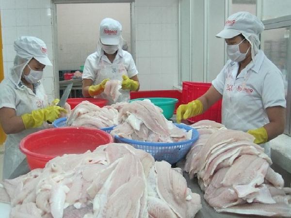 Đáng lo ngại: Cá tra Trung Quốc giá rẻ hơn cá tra Việt Nam