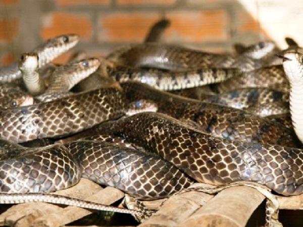 CB-Các bệnh thường gặp trên rắn