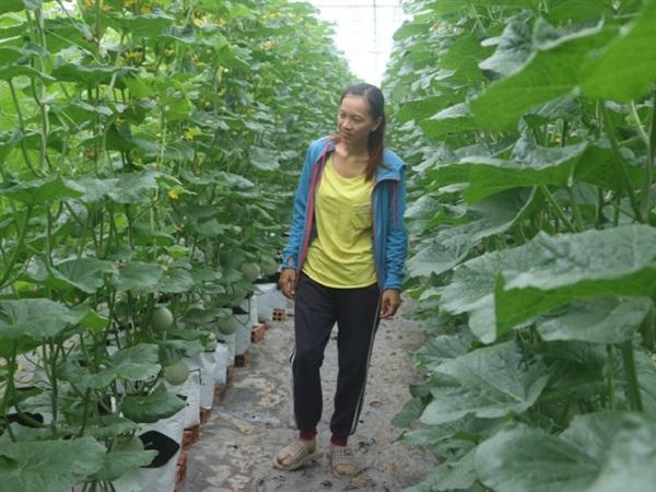 Nữ kỹ sư khởi nghiệp từ trồng dưa lưới công nghệ cao ở miền sông nước