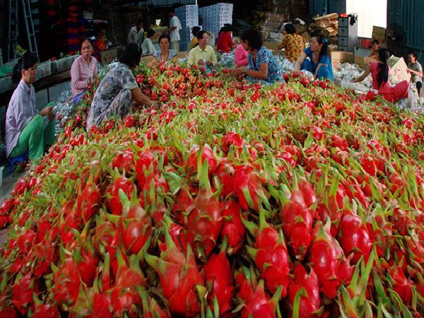 Trung Quốc chấp nhận 7 loại trái cây của nước ta vào đường chính ngạch