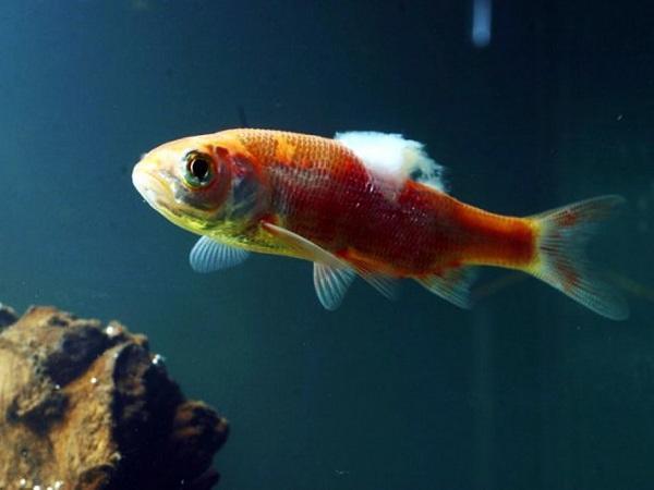 CB-Phòng trị bệnh do nấm và virus trên cá nuôi lồng bè