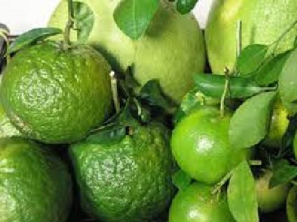 TH-Một số tiến bộ kỹ thuật bảo quản sản phẩm cây ăn quả có múi sau thu hoạch