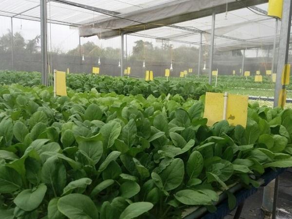 Ứng dụng công nghệ thông minh vào trồng rau thủy canh tại TP Hồ Chí Minh