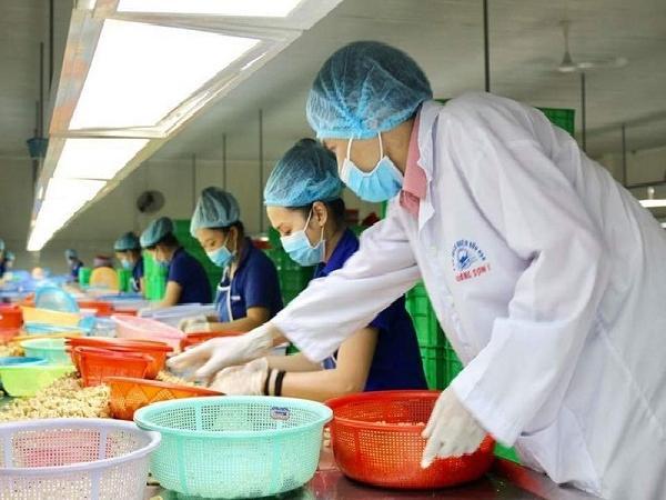 Trung Quốc mở nhiều nhà máy hạt điều dọc biên giới Việt Nam