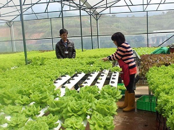 Trình độ sản xuất nông nghiệp công nghệ cao tại Lâm Đồng tương đương Thái Lan, Malaysia