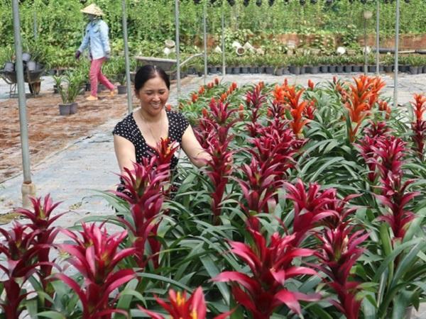 Thành nữ tỷ phú nhờ trồng hoa kiểng
