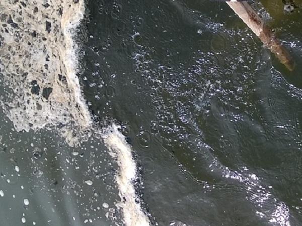 XL-Ngộ độc tảo lam trong ao nuôi tôm và cách khắc phục