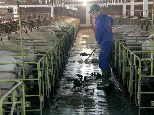 N-Phương pháp giải quyết vấn đề dịch bệnh trong nông trại
