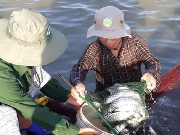Lãi hơn nữa tỷ nhờ nuôi tôm xen canh cá